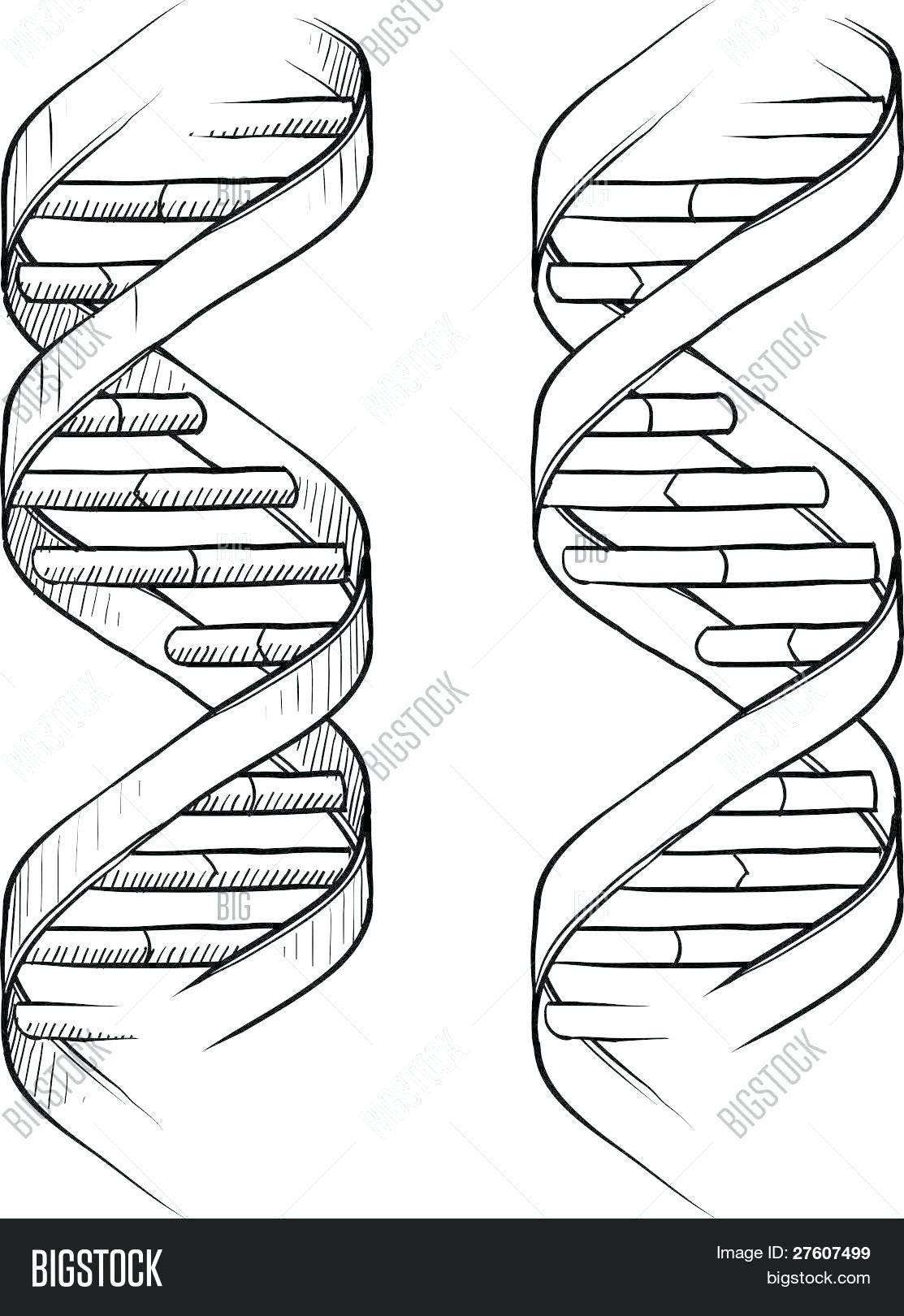 dna double helix coloring worksheet 15