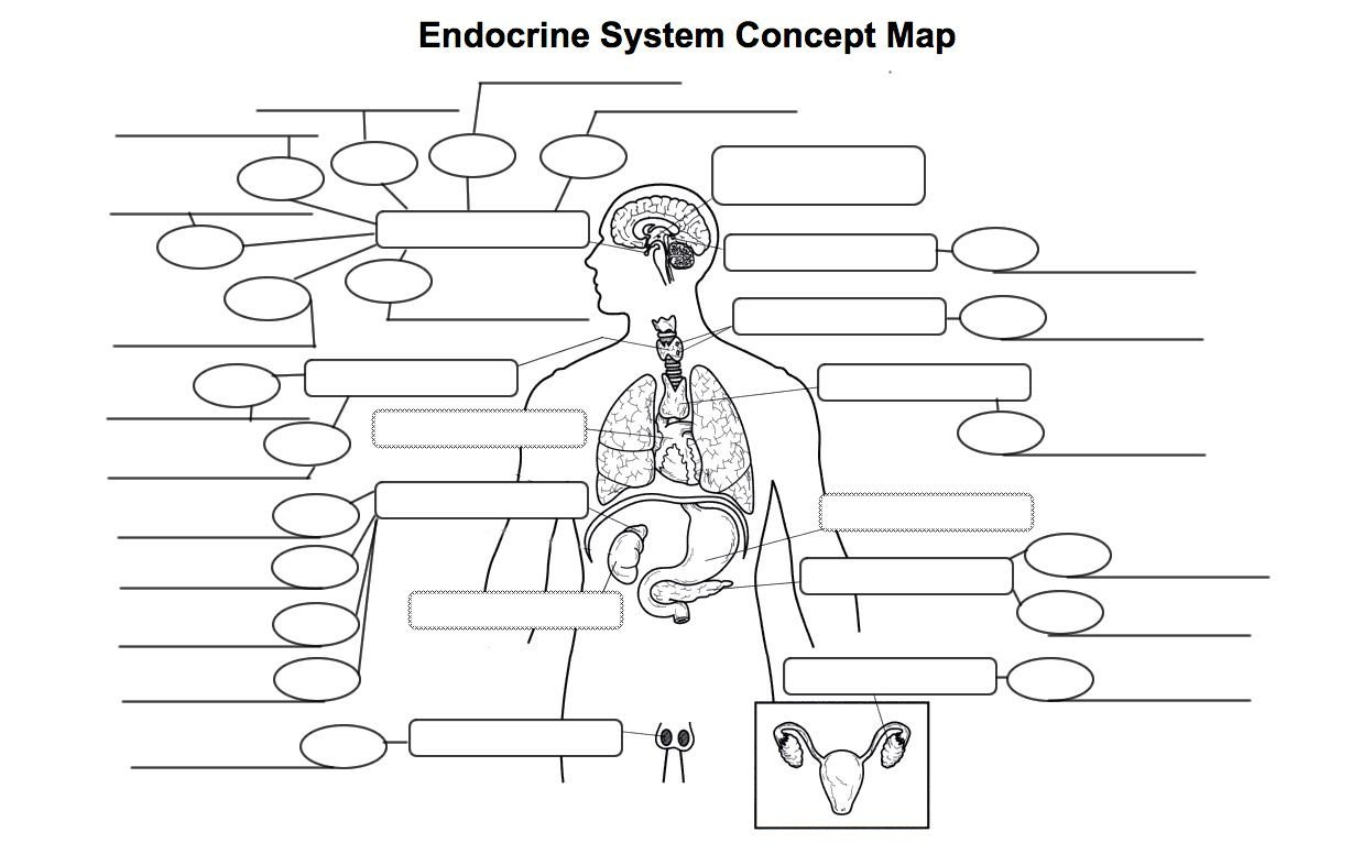 Endocrine System Coloring Worksheet Endocrine System Diagram Worksheet Endocrine System