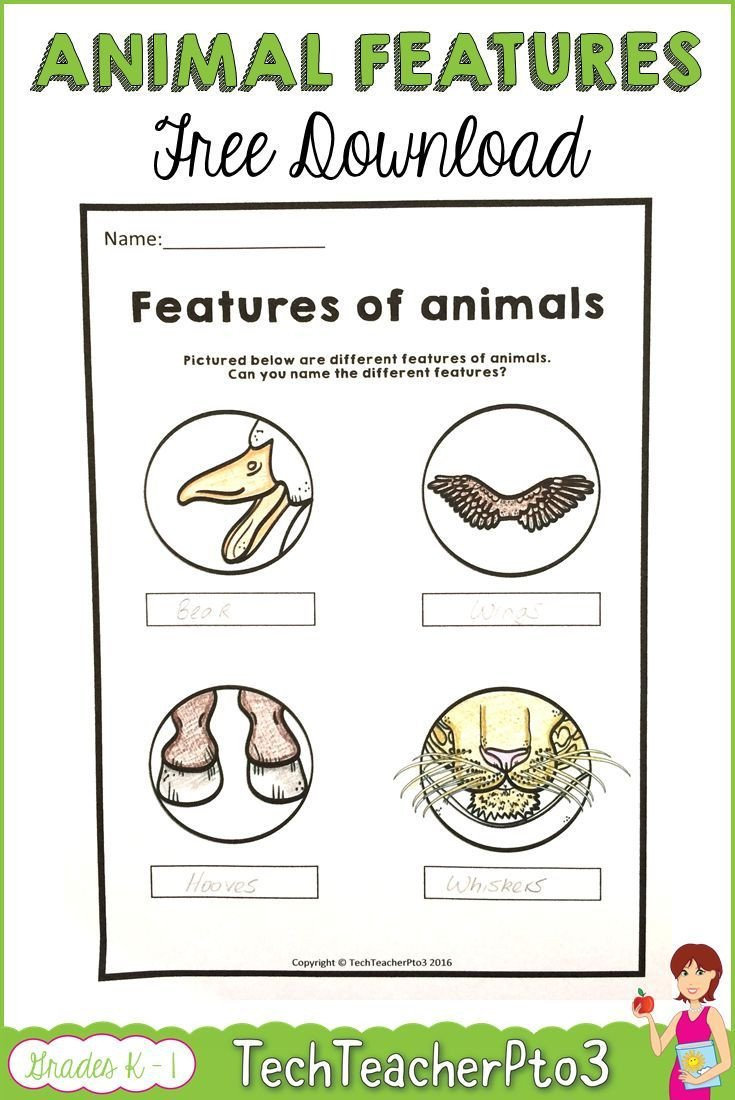 From Farm to Table Worksheets Farm Animals Worksheets Free Download