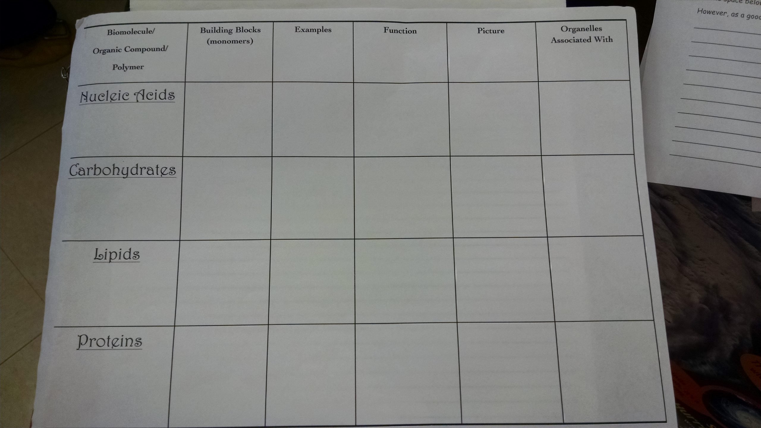 Macromolecule Comparison Table Worksheet Answers Agenda and Inb Mrs Hall S Science Class Brms