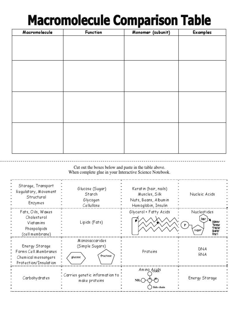 Macromolecule Comparison Table Worksheet Macromolecule Parison Table 1