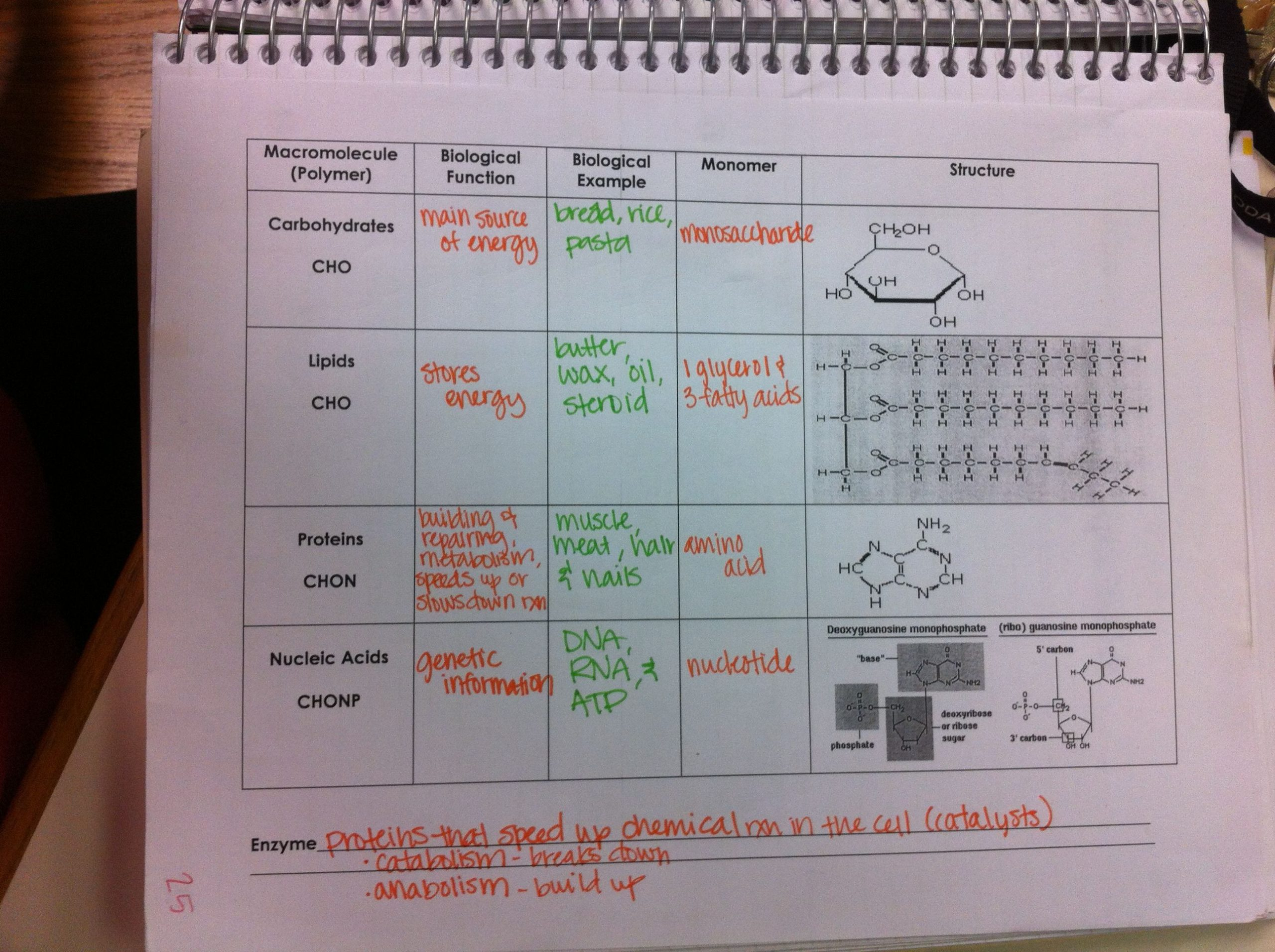 Macromolecule Comparison Table Worksheet Shannon Shadoan Shannonshadoan On Pinterest