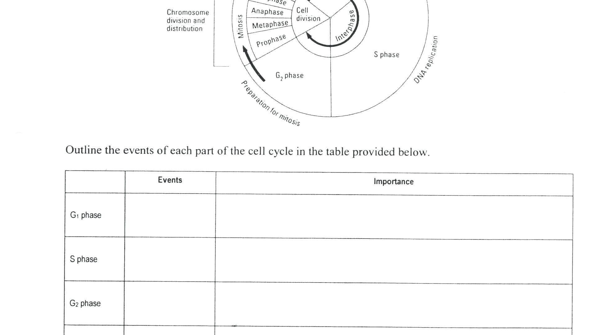 Mitosis Coloring Worksheet Answer Key Cell Cycle Coloring Worksheet Best Mitosis Coloring