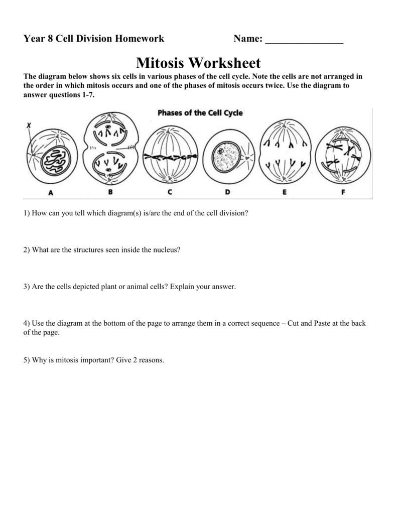Mitosis Coloring Worksheet Answer Key Cell Cycle Worksheet Answer Key Nidecmege