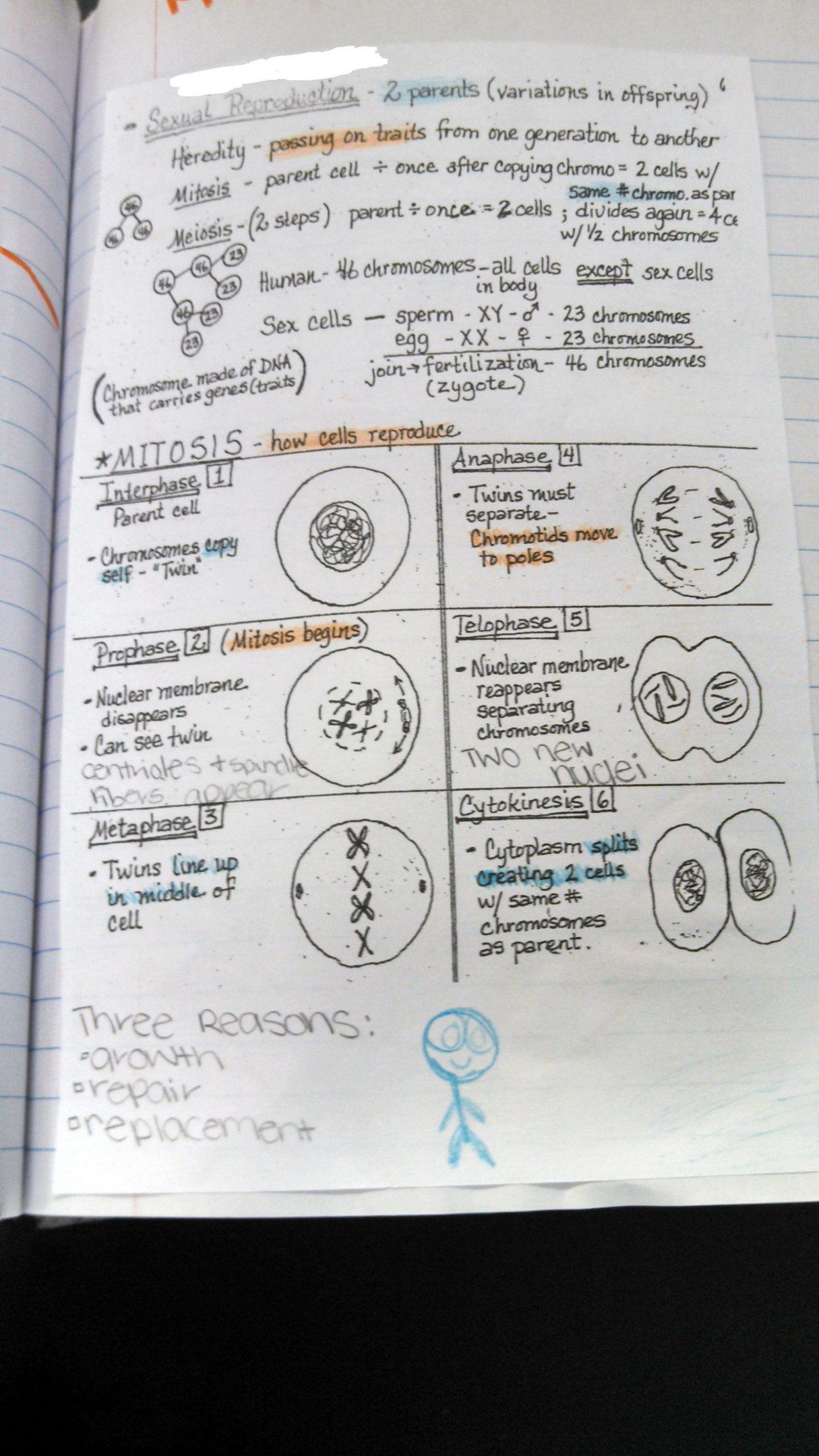 Mitosis Coloring Worksheet Answer Key Section 1 Reinforcement Cell Division and Mitosis Worksheet