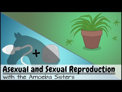Asexual Reproduction Worksheet High School A Ual and Ual Reproduction