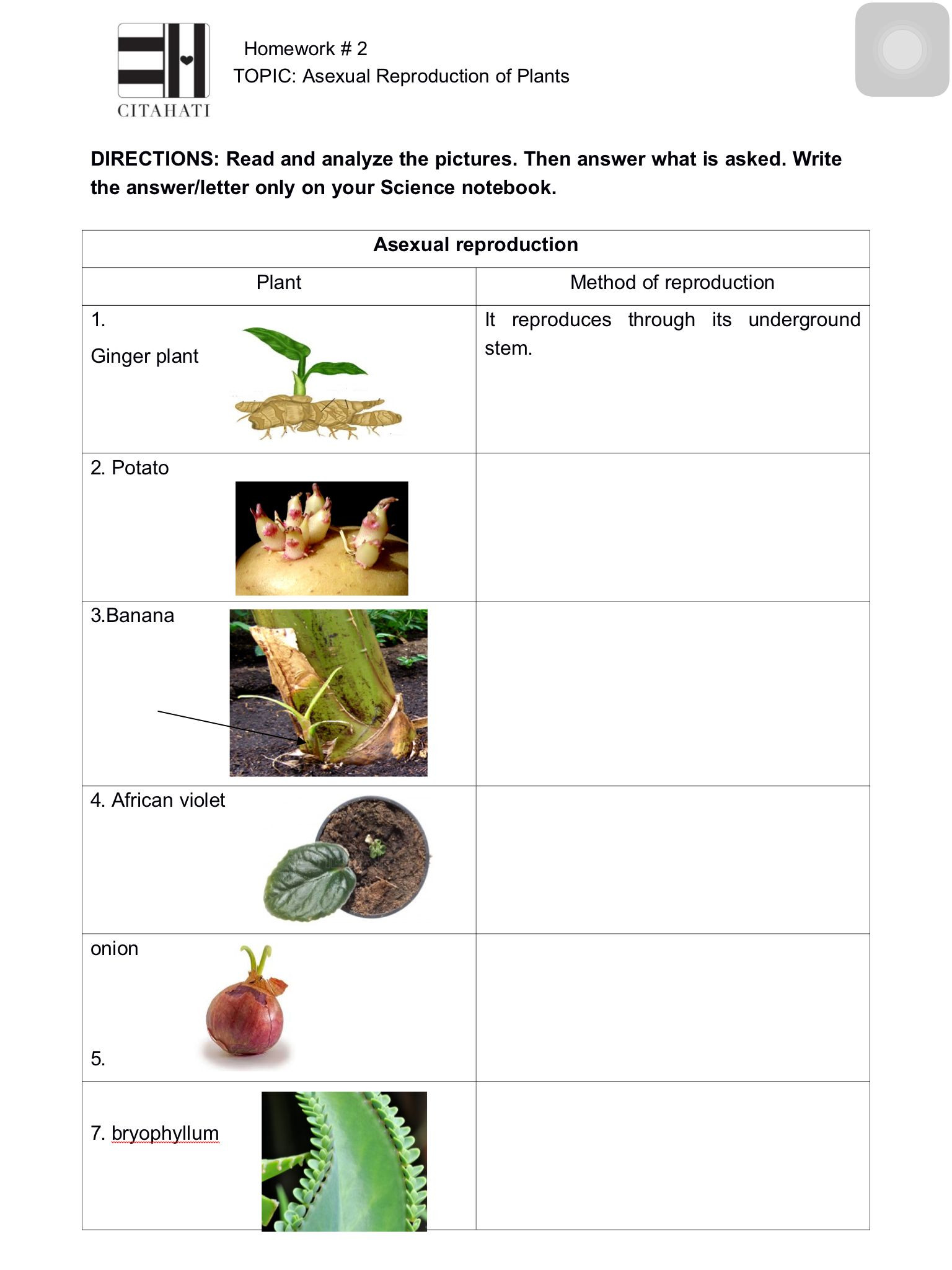 Asexual Reproduction Worksheet High School Pin On theme 1