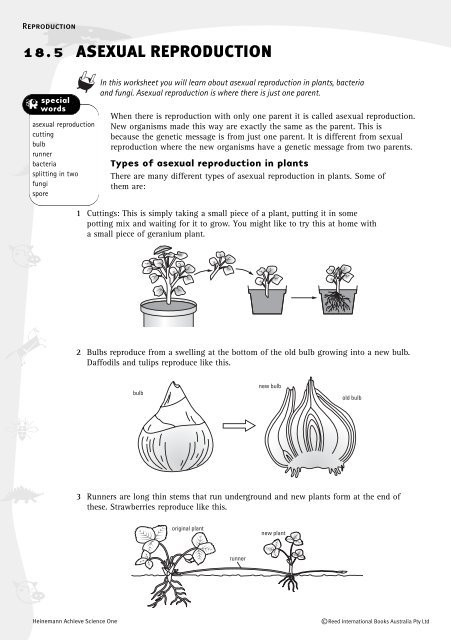 Asexual Reproduction Worksheet High School Worksheet A Ual Reproduction