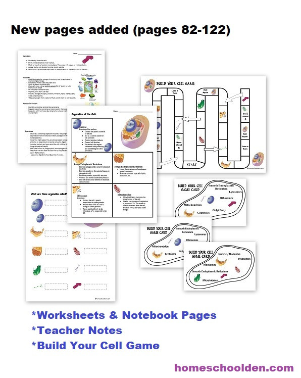Astronomy Worksheets High School Free Cellular Respiration Worksheets Homeschool Den