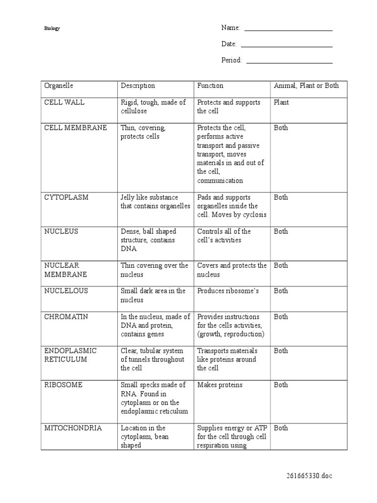 Cell organelle Worksheet High School Cell organelles Worksheet Cell Nucleus