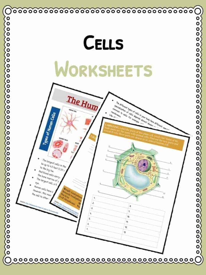 Cell theory Worksheet 7th Grade Cell Facts Information & Worksheet