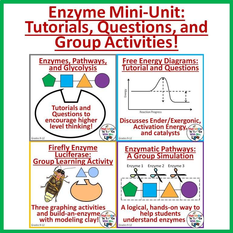 Enzyme Worksheet High School Biology Enzymes Mini Unit Worksheets Graphing Activities and