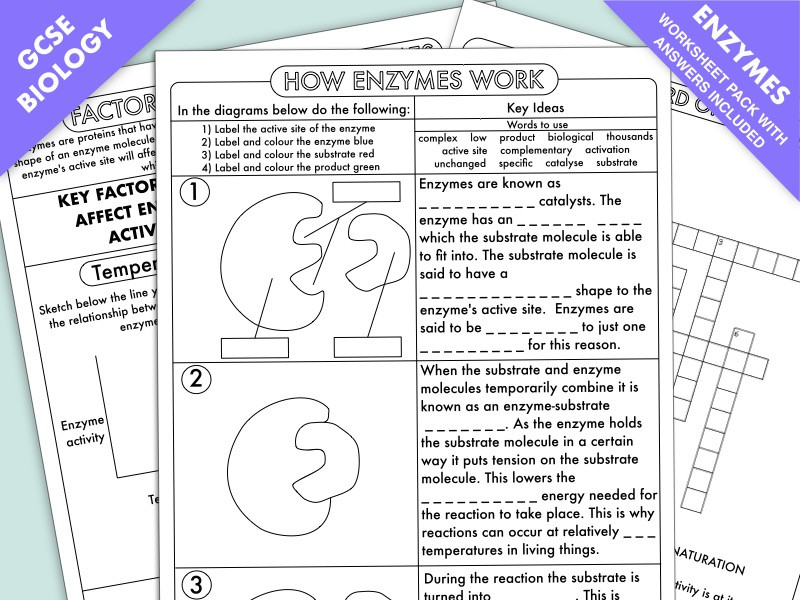 Enzyme Worksheet High School Biology Gcse Biology Enzyme Worksheet Pack