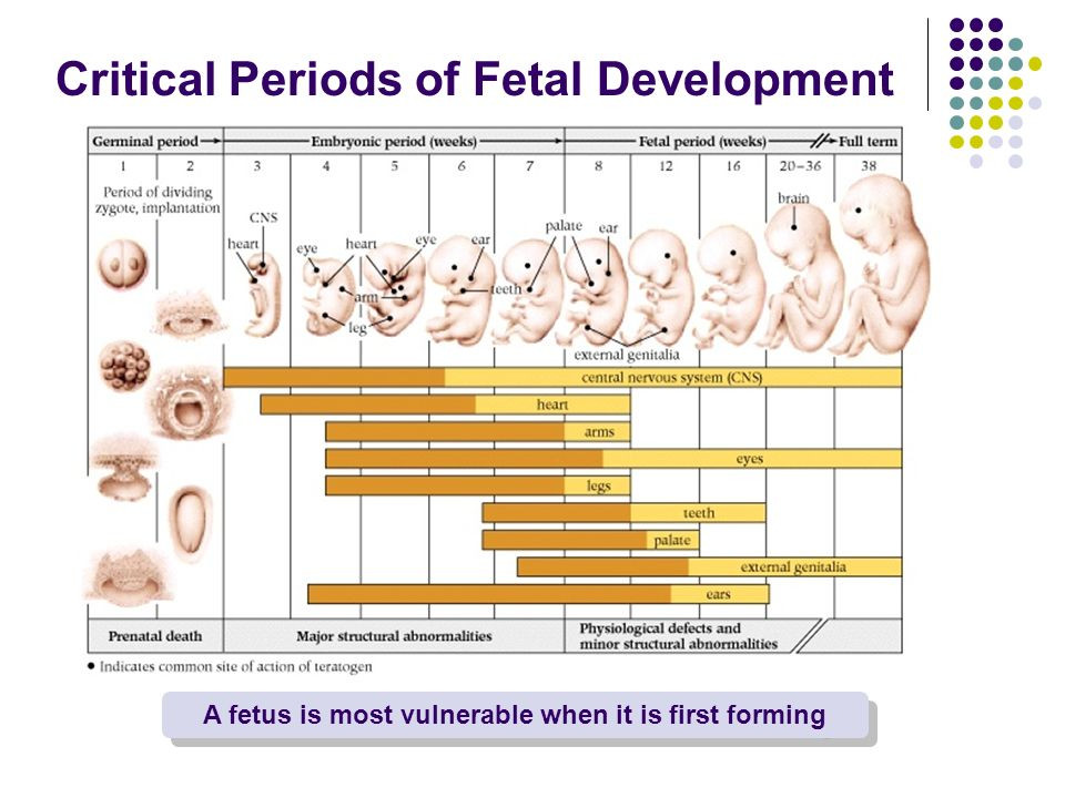 Fetal Development Worksheet High School Prenatal Development and Birth Chapter 3 the Development Of