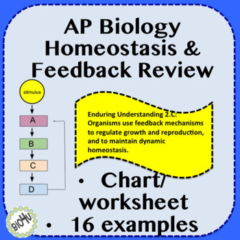 Homeostasis Worksheet High School Ap Biology Homeostasis and Feedback Review