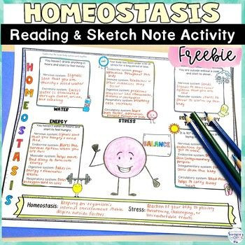 Homeostasis Worksheet High School Homeostasis Free Human Body Worksheets and Sketch Note