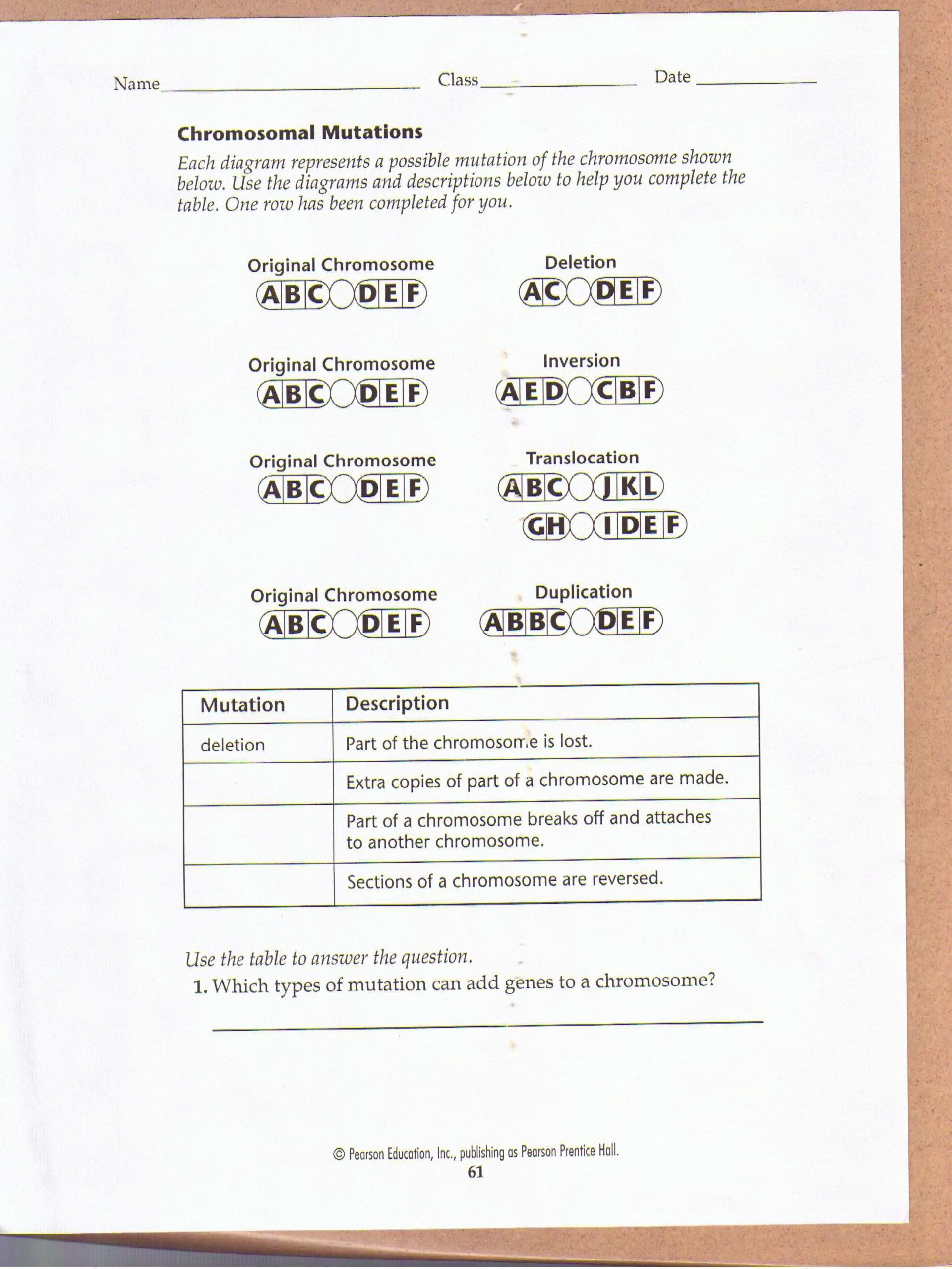 Mutations Worksheet High School Chromosomal Mutations Worksheet