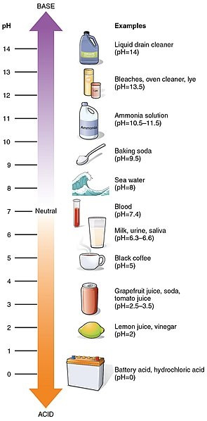 Ph Worksheet High School Ph Scale Lesson for Kids Definition & Facts