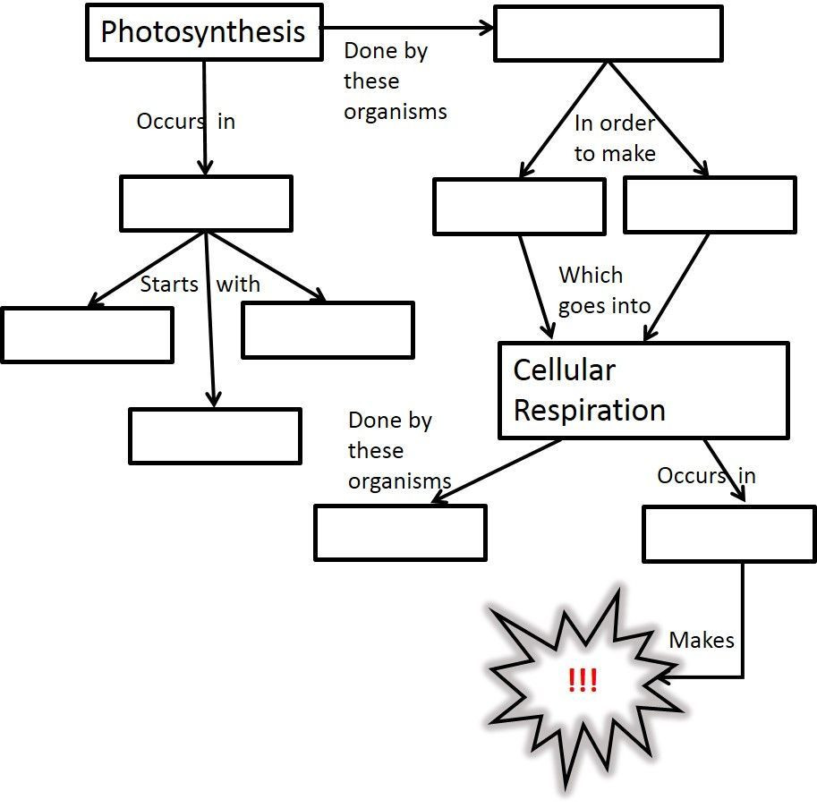 Photosynthesis Diagram Worksheet High School Synthesis and Cellular Respiration Worksheets High