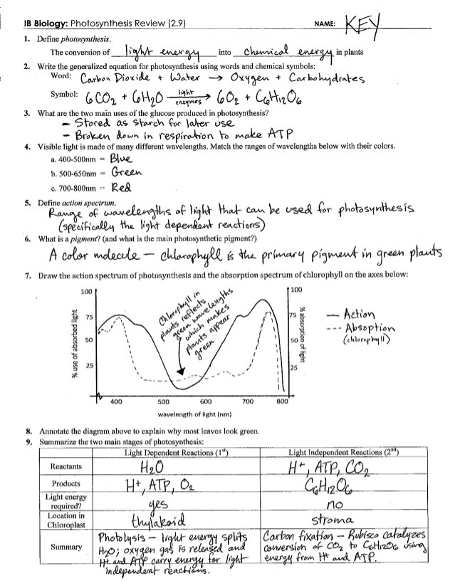 Photosynthesis Diagram Worksheet High School Synthesis Review Key 2 9