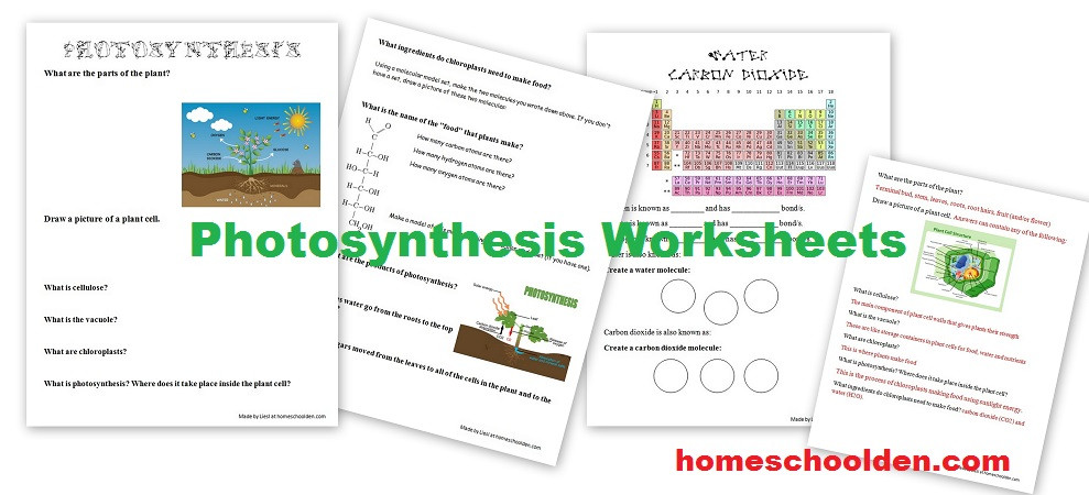 Photosynthesis Diagram Worksheet High School Synthesis Worksheets Homeschool Den