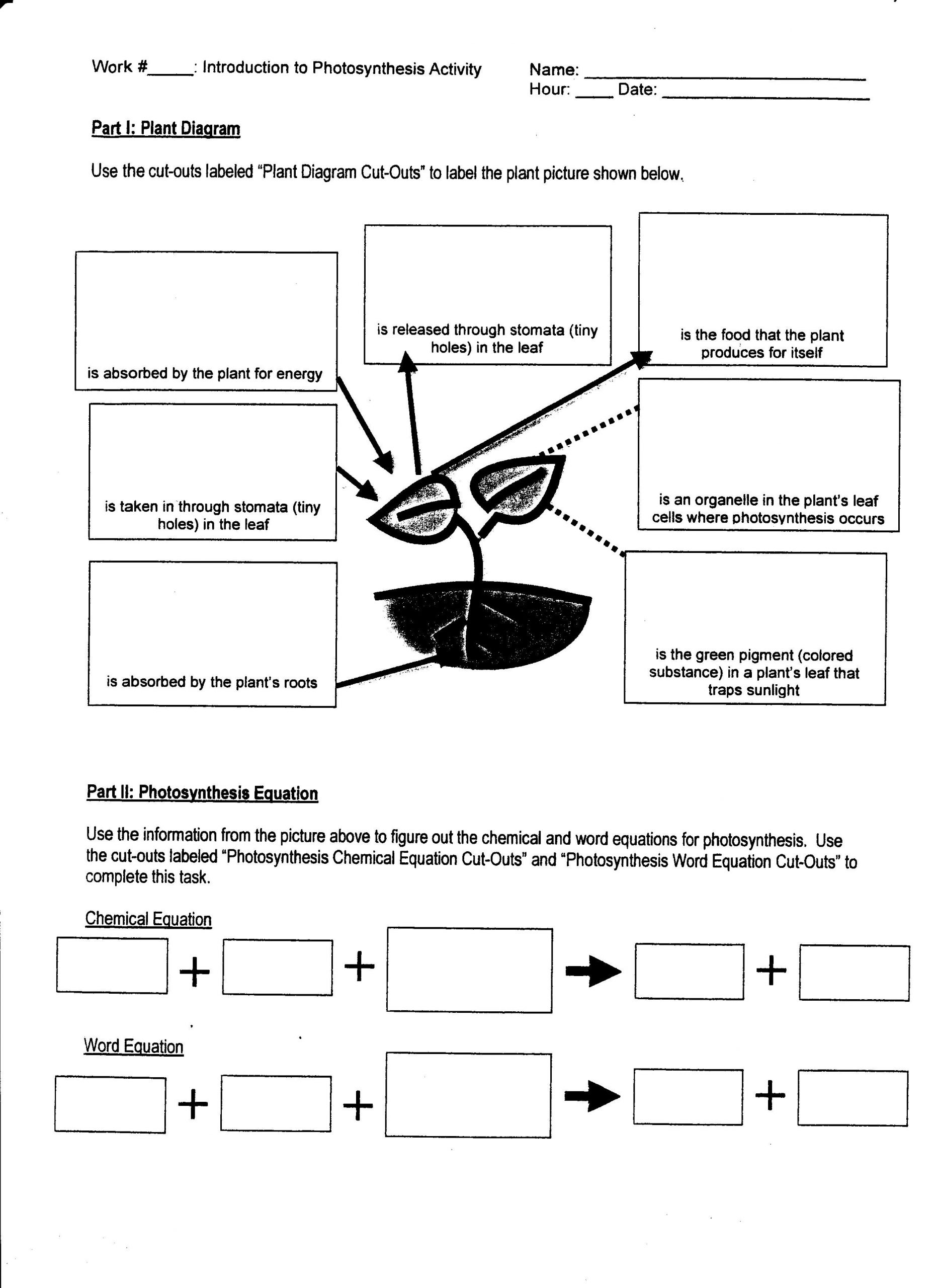 Photosynthesis Diagram Worksheet High School Week 15 Synthesis and Respiration
