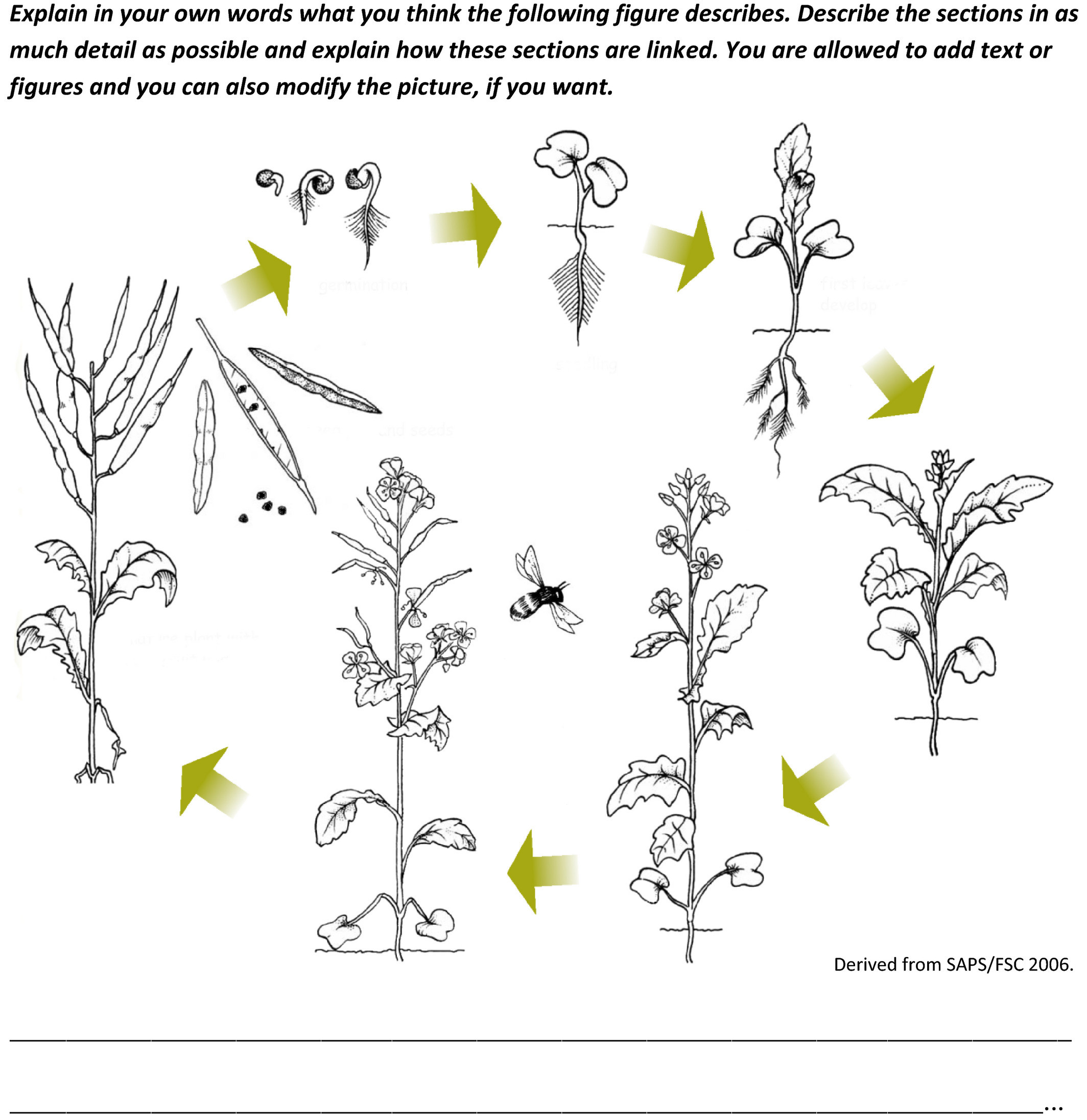 Plant Reproduction Worksheet High School Understanding Students Conceptions Of Plant Reproduction to