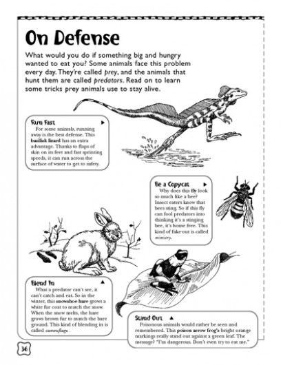 Predator Prey Worksheet High School Defense Predators and Prey