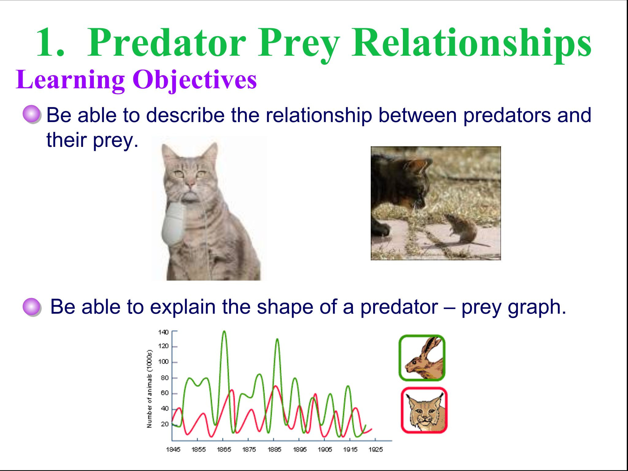 Predator Prey Worksheet High School Predator Prey and Carrying Capacity Google Slides