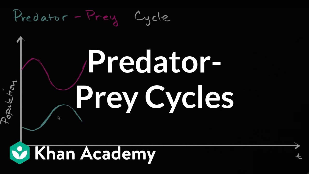 Predator Prey Worksheet High School Predator Prey Cycles Video Ecology