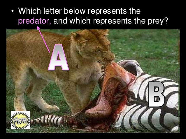 Predator Prey Worksheet High School Predator Prey Relationships Lesson Powerpoint