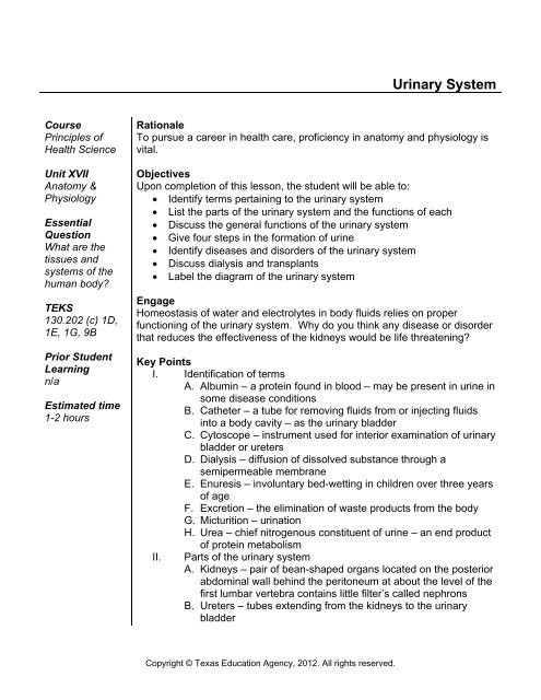 Urinary System Worksheet High School Urinary System Health Science Technology Education